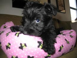 Lucy 2 mo