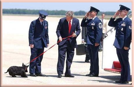 Presidents found Scotties an ideal dog; Barney Bush displays our ...