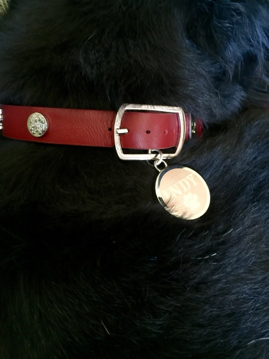 Indy's Rustic Cuff dog collar