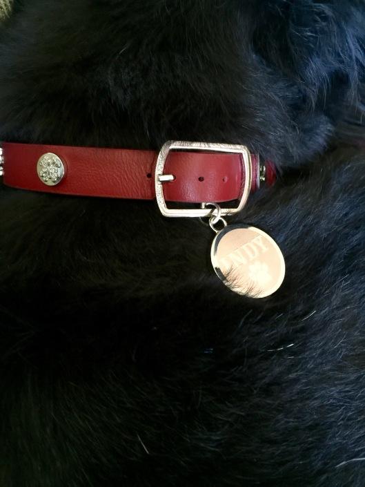 Indy's Rustic Cuff dog collar