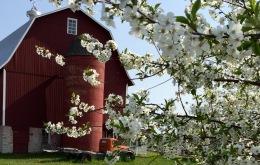 Lautenbach's Orchards, Door County