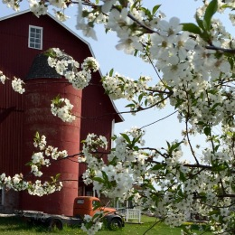Lautenbach's Orchards, Door County