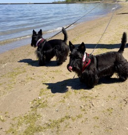 Indy and Lucy, Lake Michigan