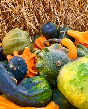 Door County gourds