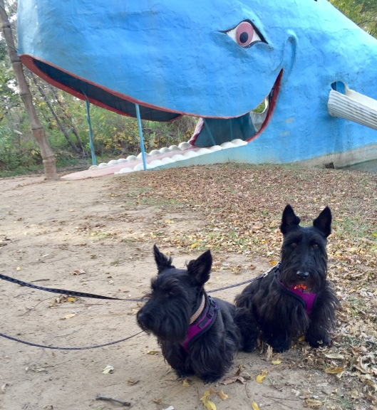Indy and Lucy, Route 66, Blue Whale