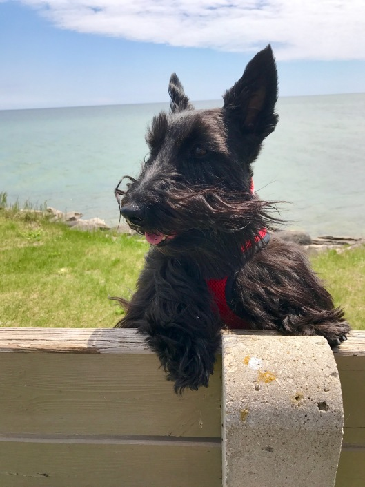 Lucy, Baileys Harbor, WI